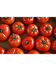 50 - Seeds : Trust F1 Hybrid Tomato Seeds - They are Very Sweet, Firm, and flavorful.!!!
