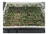 Rockwool/Stonewool Grow Cubes Starter Sheets for