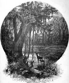 Grabado antiguo (1888) - Xilografía - Paisajes Norteamericanos: Un Lago En La Florida (18.5x26), Desconocido