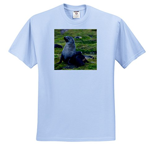 danita-delimont-seals-south-georgia-antarctic-fur-seal-pup-nestles-next-to-its-mother-t-shirts-youth