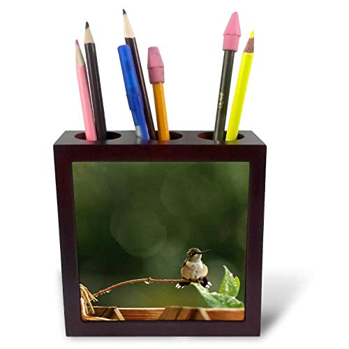 (3dRose Stamp City - Birds - Photo of an adorabe Female Ruby Throated Hummingbird with a Mohawk. - 5 inch Tile Pen Holder (ph_302852_1))