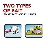 Raid Max Double Control Ant Baits, 0.28 oz, 8 CT