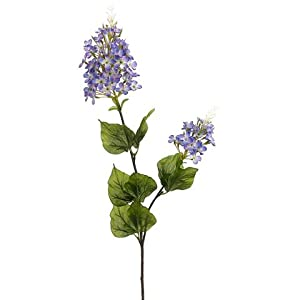 "29"" Lilac Spray Blue Delphinium (Pack of 12) 49"