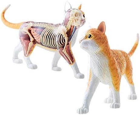 4D Oranje Cyperse Kat Skelet Anatomie Model Kit Een 30 Cm Lengte Model Bevat 25 Afneembare Organen En Lichaamsdelen En Display Standaard 28 Punten Voor School