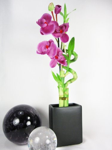 9GreenBox - Lucky Bamboo - Spiral Style with Silk Flowers and Black Ceramic Vase