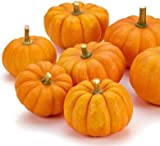 buy Jack Be Little Pumpkin Seeds - Mini Pumpkins - 10+ Premium Heirloom Seeds - ON SALE! - (Isla's Garden Seeds) - Non Gmo - 85% Germination! - Total Quality now, new 2019-2018 bestseller, review and Photo, best price $6.99