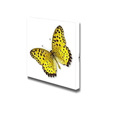 Canvas Prints Wall Art - Beautiful Flying Yellow Butterfly on White Background | Modern Wall Decor/Home Decoration Stretched Gallery Canvas Wrap Giclee Print & Ready to Hang - 16