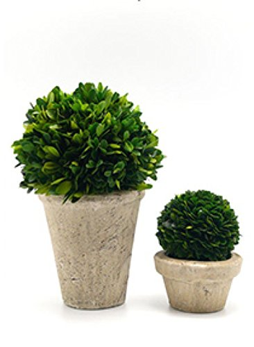 Handcrafted Potted Topiary; Cone Potted Preserved Boxwood Topiary