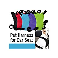 Amazon Com Best Sellers The Most Popular Items In Dog