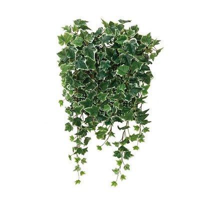 光触媒 人工観葉植物 光の楽園 壁面緑化斑入アイビー(壁掛けタイプ) 441C70 B01IGBXEN4