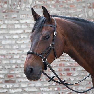 Waldhausen Dover Saddlery Linda Tellington-Jones Lindell Bitless Bridle Bridle, Horse-F/S, Black