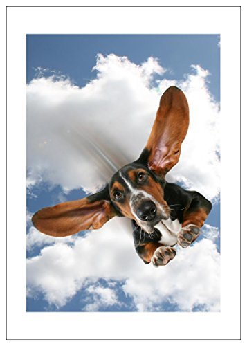 NW Pitney Ink Basset On Air Birthday Card, 5 x 7