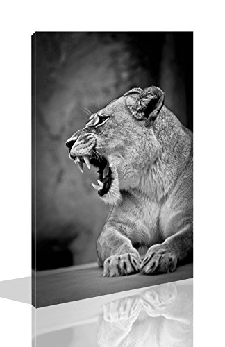 Lion Picture Roar (The Melody Art-1 Pce Modern Giclee Prints Framed Animal Artwork Lion's Roar Picture Print to Photo Printed Paintings on Canvas Wall Art Decor for Home Decorations 16 by 24 inch)