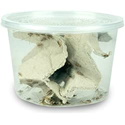 "Josh's Frogs 1/4"" Banded Crickets (120 Count)"