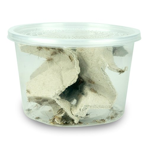Josh's Frogs 1/4 Banded Crickets (120 Count) -