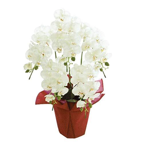 人工観葉植物 ピュアオーキッド5本立(ラッピング) 光触媒加工 高さ70cm zv8050 (代引き不可) インテリアグリーン 造花 B07T11FVVW