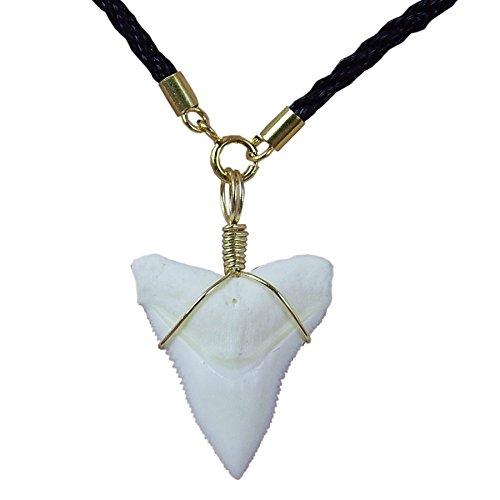 GemShark Real Bull Shark Tooth Necklace Gold 14 K Plating Black Cord Choker Pendant Double Best Friend (0.9 inch Bull)