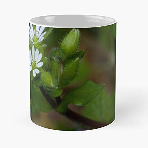 Wildflowers Chickweed Henbit Blossoms - Funny Gifts For Men And Women Gift Coffee Mug Tea Cup White-11 Oz.