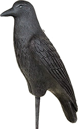 Flambeau Outdoor 5900FCR Flocked Foam Crow Specialty Decoy by Flambeau Predator (Image #1)