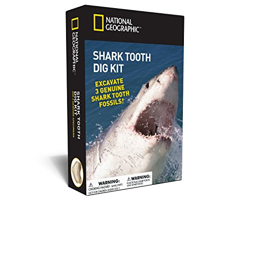 NATIONAL GEOGRAPHIC Shark Tooth Dig Kit - Excavate 3 real Shark Tooth Fossils including Sand Tiger, Otodus and Crow Shark - Great Science Gift for Marine Biology Enthusiasts of any age ()