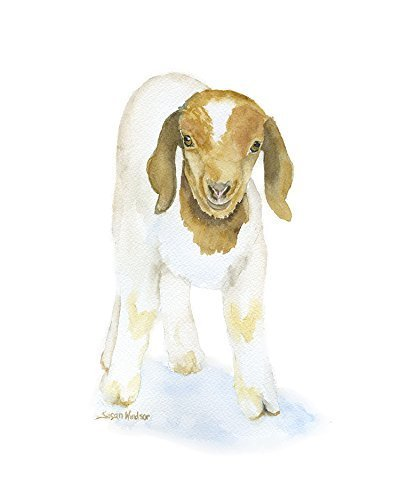 Goat Watercolor Painting Giclee Print Reproduction by Susan Windsor