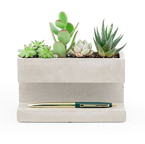 A desktop planter is a great way to bring a little greenery into your office, without sacrificing sp
