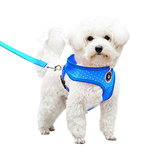 Blue Small Soft Mesh Polka Dots Dog Harness with Matching Leash (Pitbull Dog Harness Small compare prices)