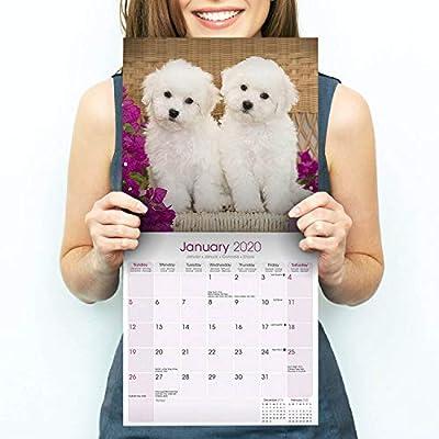 Bichon-Frise-Calendar-2020-Dog-Breed-Calendar-Wall-Calendar-2019-2020