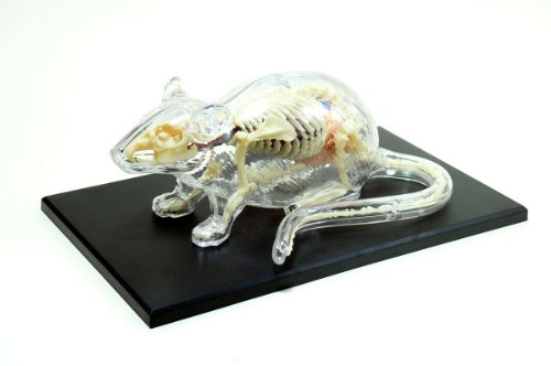 No.14 rat anatomy skeleton model Skynet three-dimensional puzzle 4D VISION animal anatomy (japan import) by Aoshima