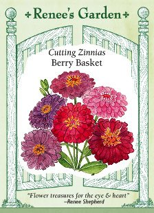 Zinnia, Berry Basket, Cutting