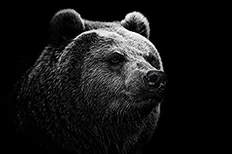 Animal Bear Pography Canvas Painting Wall Art Home Decor Christmas MMLUCK Decorative Paintings Black and White Animal Bear Canvas Print and Poster