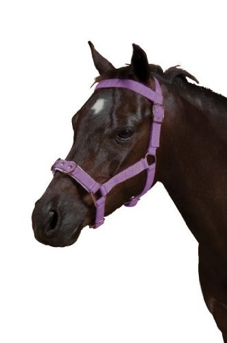 - Nylon Padded Lunge Cavesson - Color:Purple Size:Cob