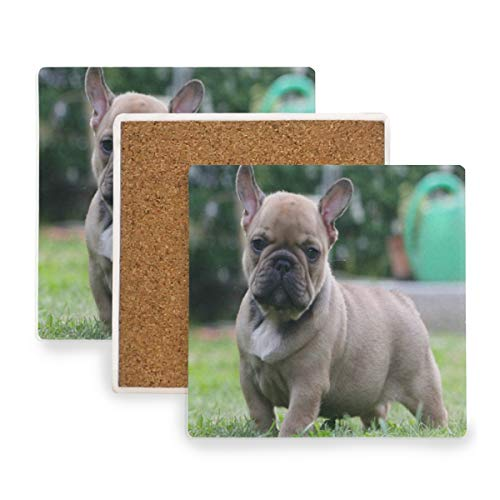 Puppy In The Wild Coasters, Prevent Furniture from Dirty and Scratched, Square Wood Coasters Set Suitable for Kinds of Mugs and Cups, Living Room Decorations Gift 1 Piece