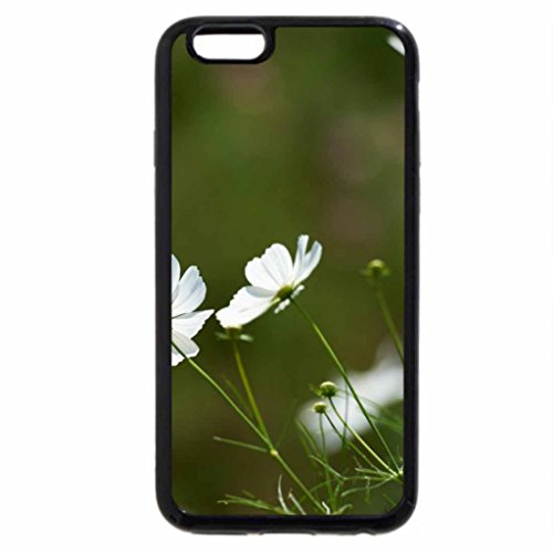 iPhone 6S / iPhone 6 Case (Black) beauty white in the grass