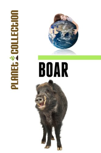 Boar: Picture Book (Educational Children's Books Collection) - Level 2 (Planet Collection)
