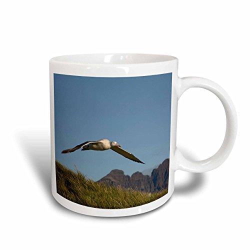 3dRose South Georgia Island Prion Wandering Albatross Bird, Ceramic Mug, 11-Oz