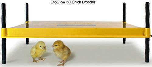 EcoGlow 50 - the Larger Chick Brooder