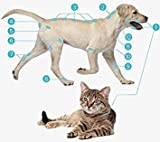 B-cure Laser Vet Device for Pets: A Home Laser