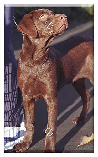 Single-Gang Blank Wall Plate Cover - Dog Labrador Retriever Chocolate Buddy Pet