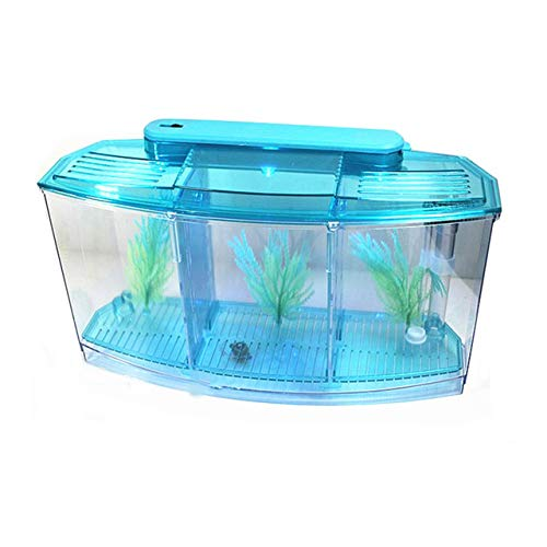 1 pc Aquarium Acrylic Fighting Fish Box Tank BettaTankThree Grid Fish Supplies Accessries   bluee, M
