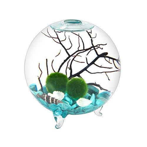 Mini Aquarium Kit - 4