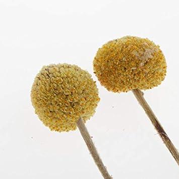 20g A Hellery 1 Paquete de Flores Reales Prensadas Secas Naturales para Adornos de Bricolaje para Cajas de Tel/éfonos Fabricaci/ón de Jab/ón de Velas