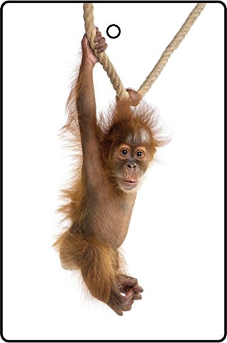 orangutan gifts kritters   mailbox orangutan collectibles