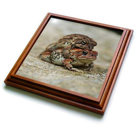 3dRose Stamp City - amphibian - Macro photograph of a toad getting a piggy or toady back ride. - 8x8 Trivet with 6x6 ceramic tile (trv_316768_1)