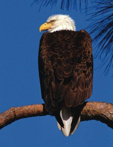 Bald Eagle Blank Sketchbook: Art Sketch Pad Notebook (Wildlife150 Sketch) (Volume 8) pdf epub