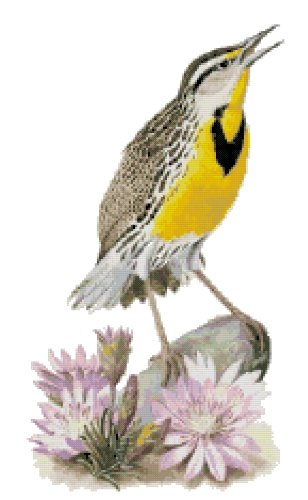 Montana State Bird (Western Meadowlark) and Flower (Bitterroot) Counted Cross Stitch Pattern