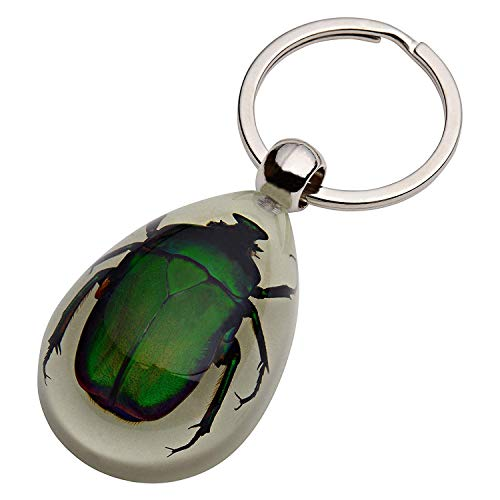 TOOGOO Glow-in-The-Dark Real Insect Keychain (Green Chafer)