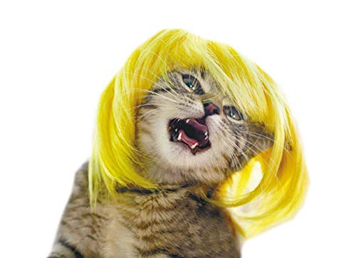 HBK2 [MPK Cat Wigs] Yellow and Blue Cat Wigs, Pet Wig, Funny Cat Wig, Cat Costume ()