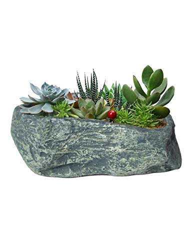(Dahlia Stone Like Handmade Concrete Succulent Planter/Plant Pot/Flower Pot/Bonsai Pot, 4)