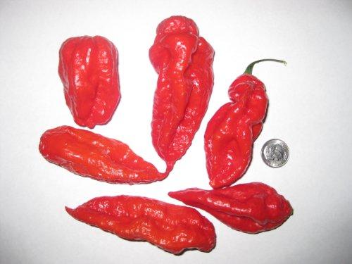Filipino Bird/'s Eye Chili Very Rare Super Hot! 20 Seeds Pepper Siling Labuyo